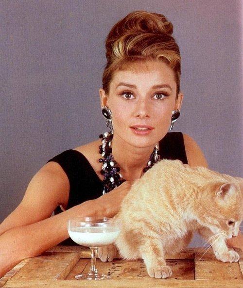 актриса с котом рыжего цвета
