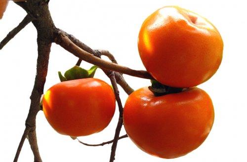 ягоды хурмы на ветке